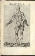 Tavola IX del Lib. II