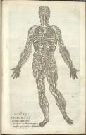 Secu: fig: integra et ab omnibus partibus libera ac nuda venae cavae delineationem eiusque in universum corpus processum ac distributione