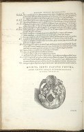 De Octo Capitis Ossibus et futuris haec commenttentibus. Caput VI. Fig.V