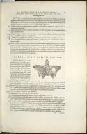 De Octo Capitis Ossibus et futuris haec commenttentibus. Caput VI. Fig.VIII