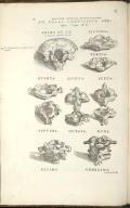 De Colli Cervicisue Vertebris. Caput XV. Figs.I-XI