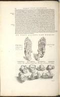 De Pedis Ossibus. Cap. XXXIII. Fig.I-IX