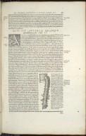 Quid Sit Arteria, Quaeque ipsius substantia et usus. Caput II.