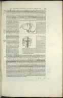 Venae Cavae portionem oculis subucit, Iecoris gibbu posterioreq.