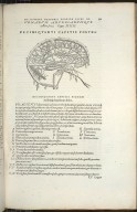 Venerum Arteriarumque cerebri feries. Caput XIIII.