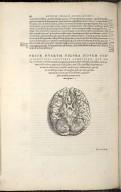 Prior Duarum Figura novem subsequentibus capitibus communium.