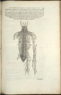 Tertia Trium Figura subsequentibus capitibus communium, quae ossium dorsi..