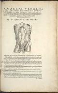 Organis Nutritioni, figura tanta humani corporis portio delineatur, quanta ad peritonaes sedes ostendendas sufficit.