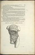 Organis Nutritioni, Tertia Quinti Libri Figura.