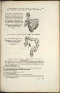 Organis Nutritioni, Septima Quinti Libri Figura, Octava Quinti Libri Figura.