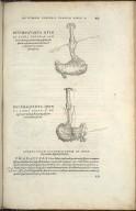 Organis Nutritioni, Decimaquarta Quinti Libri Figura, Decimaquinta Quinti Libri Figura.