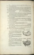 Organis Nutritioni, Decimasexta Quinti Libri Figura, Decimaseptima Quint Libri Figura.