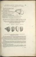 Organis Nutritioni, Decimaoctava Quint Libri Figura, Decimanona Quinti Libri Figura