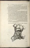 Organis Nutritioni, Vigesimasecunda Quinti Libri Figura.