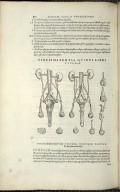 Organis Nutritioni, Vigesimatertia Quinti Libri Figura.