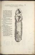 Vigesimaseptima Quinti Libri Figura.