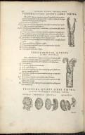 Vigesimaoctava, Vigesimanona, Trigesima Quinti Libri Figura.