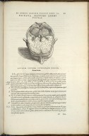 Octava Septimi Libri Figura