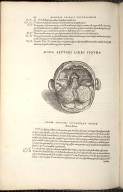 Nona Septimi Libri Figura