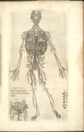 Tert: Fi: Integra totius magne arterie ab, omnibus partibus libere delinationem. Monstrat