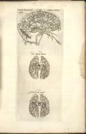 Sexta Fig: Venarum pariter ac arteriarum cerebri seriem explicat. VII. Venae Arterialis delineatio VIII. Arteriae Venalis processus.