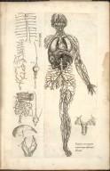 Venarium et item arteriarum, omnium integra absolutaque, delineatio