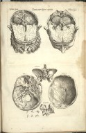 Quarta Pagina Figurarum Capitalium