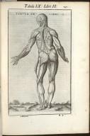 Tabula IX. Libri II.