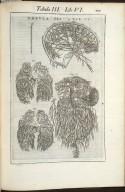 Tabula III. Libri VI.
