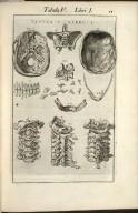 Tabula V. Libri I.