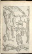 Decimaquinta Musculoru Tabula que alias preterea continet figuras, quarum usum sequeus monstrahit Index.