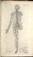 Septima Nervorem Figura, Octava Nervorem Figura