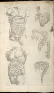 Quinta Figura - [The Plates of the Organs of Nouryshynge]