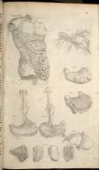 Undecima Figura - [The Plates of the Organs of Nouryshynge]