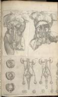 XIX, XX, XXI, XXII: Organs of Digestion