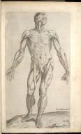 Prima Musculorum Tabula