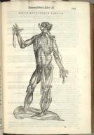 Sexta Musculorum Tabula