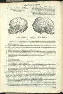 De Octo Capitis Ossibus, et Suturis, haes inuicem, & cum conterminis ipsis maxillae superioris ossibus, committentibus. Caput VI. Fig.III-IIII