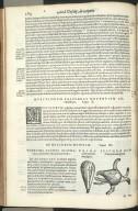 De Oculorum Musculis. Caput XI. Fig.I-II