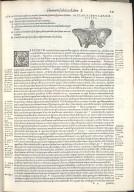 De Octo Capitis Ossibus, et Suturis, haes inuicem, & cum conterminis ipsis maxillae superioris ossibus, committentibus. Caput VI. Fig.VIII