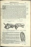 De Linguae Musculis. Caput XIX. Fig.I-III