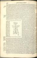 Quoniam in nuda integraq; cavae venae figura seminaliu venarum originem ita atq
