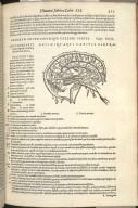 Venerum Arteriarumque cerebri feries, Caput XIIII.