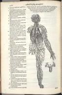 Venarum et Item Arteriarum Omnium..