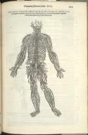 Triginta Parium Nervorum quae a dorsali medulla dorsi ossieus contenta originem ducunt..