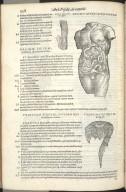Nona Quinti Libri Figura, Decima Quinti Libri Figura, Undecima Quinti Libri Figura