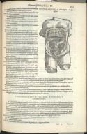 Vigesimaquarta Quinti Libri Figura