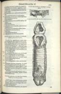 Vigesimasexta Quinti Libri Figura, Vigesimasettima Quinti Libri Figura