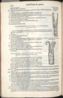 Vigesimaoctava Quinti Libri Figura, Vigesimanona Quinti Libri Figura