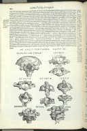 De Colli Vertebris. Caput XV. Fig.I-IX